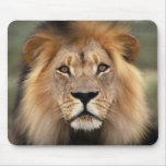 Le lion tapis de souris