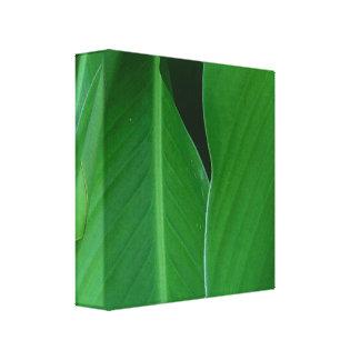 Le lis de canna vert laisse la photo toiles