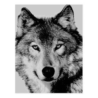 Le loup gris observe la carte postale