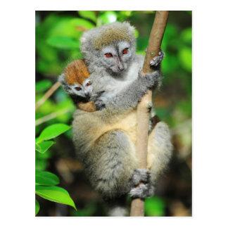 Le Madagascar, Andasibe, Ile Lemuriens aux., mère Cartes Postales