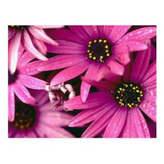 Le magenta fleurit la carte postale