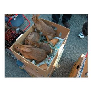 Le marché de l'agriculteur, Louans, Bresse, lapins Carte Postale