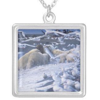 Le maritimus d'Ursus d'ours blancs), recueillent Pendentif Carré