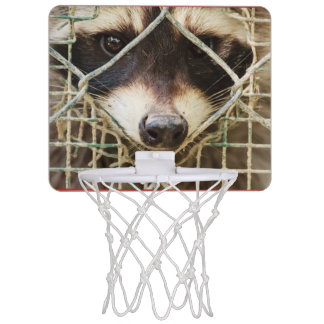 le mini cercle de basket-ball de raccon mini-panier de basket