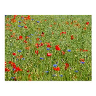 Le MIT de Sommerfeld roten l'und blauen Blumen Carte Postale