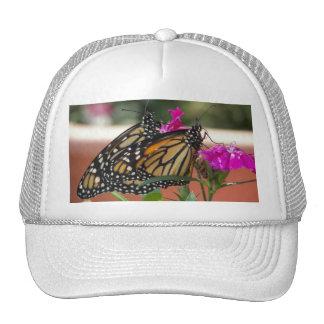 Le monarque jumelle #1-hat casquette