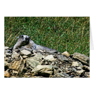 Le Montana Marmot Carte De Vœux