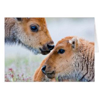 Le parc national du Wyoming, Yellowstone, bison Carte De Vœux