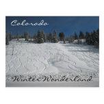 Le pays des merveilles d'hiver du Colorado Cartes Postales