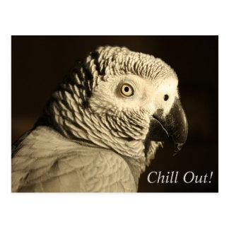 """Le perroquet de gris africain """"refroidissent !"""" cartes postales"""