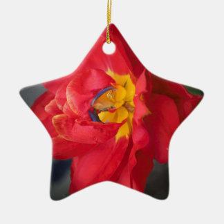 Le perroquet ornement étoile en céramique