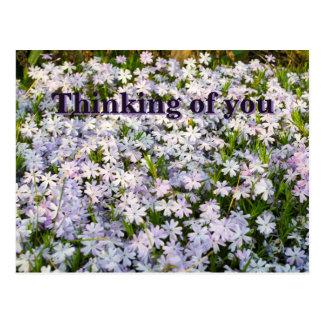Le Phlox de rampement fleurit la carte postale -