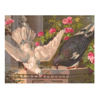 """Le """"pigeon et le blanc ont plongé"""" carte postale"""