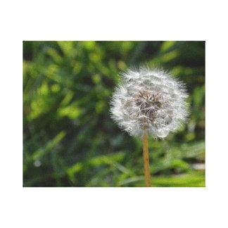 Le pissenlit et l'herbe blancs ont enveloppé la impression sur toile