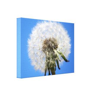Le pissenlit synchronise la fleur blanche toile tendue sur châssis
