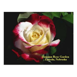 Le plaisir de double de roseraie de Hamann s'est Carte Postale