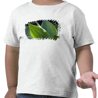 Le Portugal, île de la Madère, Funchal. Botanique T-shirt