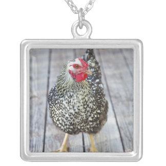 Le poulet sur la plate-forme en bois, argentent collier