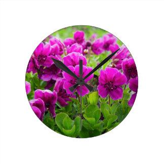 Le pourpre de beauté fleurit le camtschaticum de horloge ronde