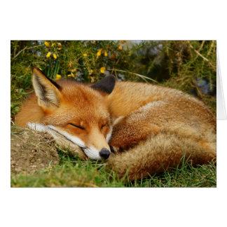 Le renard de sommeil obtiennent la carte bonne