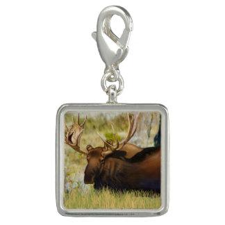Le Roi Moose Taureau de Teton Breloque Avec Photo