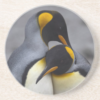 Le Roi pingouins dans des dessous de verre d'amour