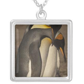 Le Roi pingouins (patagonica d'Aptenodytes P.) Pendentif Carré