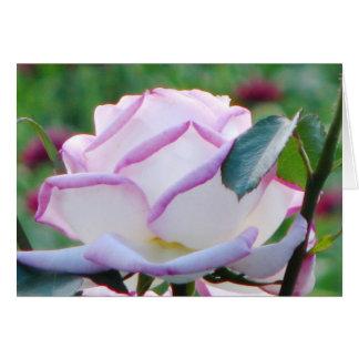 Le rose a teinté la carte de voeux de rose de thé