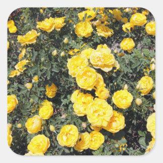 Le rose jaune ensoleillé fleurit l'autobus sticker carré