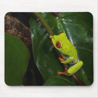 Le rouge observe la grenouille sur la tige tapis de souris