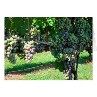 Le soleil d'août mûrit la carte vierge de raisins