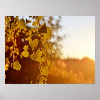 Le soleil de soirée en affiche de la Finlande Poster
