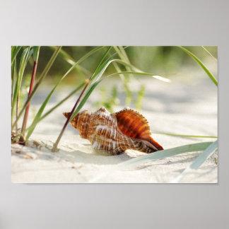 Le soleil l été plage et mer de coquille rêveure