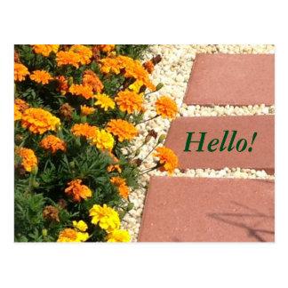 Le souci jaune-orange fleurit des cartes postales