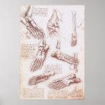 Le squelette de pied humain d'anatomie désosse da  posters