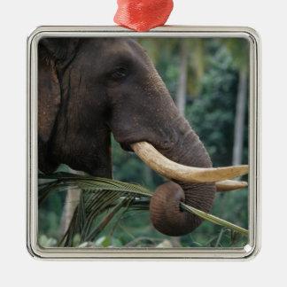 Le Sri Lanka, éléphant alimente à l'éléphant 2 de Ornement Carré Argenté