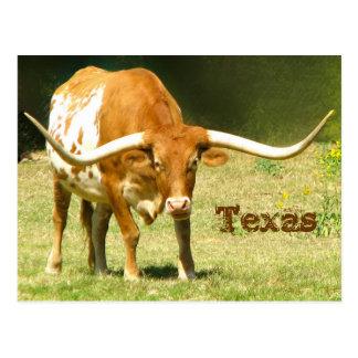 Le Texas Longhorn avec la carte postale de faits