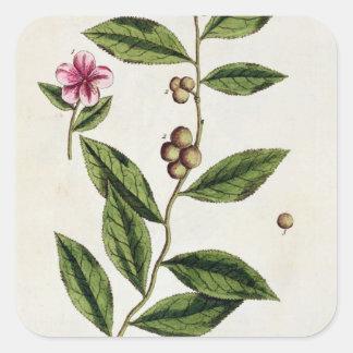 """Le thé vert, plaquent 351 """"d'un de fines herbes sticker carré"""