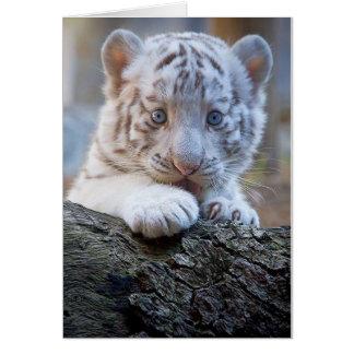 Le tigre CUB blanc est lèchement de patte bon Carte De Vœux