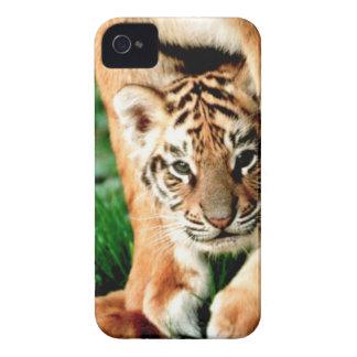 Le tigre CUB de Bengale scrute Coques Case-Mate iPhone 4