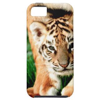 Le tigre CUB de Bengale scrute Étuis iPhone 5