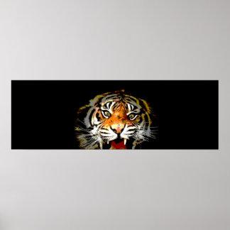 Le tigre de Sumatran observe l'affiche