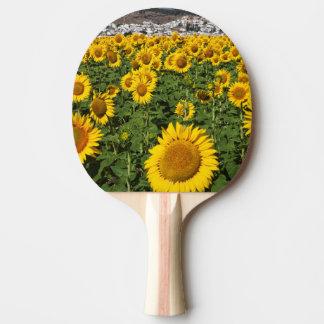 Le tournesol met en place, la ville blanche de raquette de ping pong