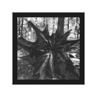 Le tronçon d'arbre enracine la photo noire et toiles