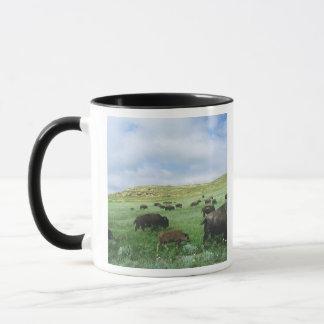 Le troupeau de bison frôlent l'herbe de prairie mug