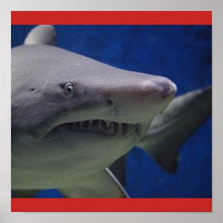 Le type gallon de bain de poissons de requin posters