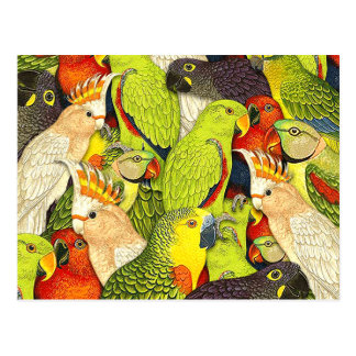 Le vert lunatique de nature Parrots le motif Cartes Postales