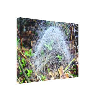 Le Web de l'araignée légère de dôme a enveloppé la Toile