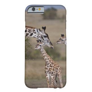 Le wie de girafe de Maasai (girafe Tippelskirchi) Coque Barely There iPhone 6