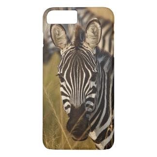 Le zèbre de Burchell dans l'herbe grande d'été, Coque iPhone 7 Plus